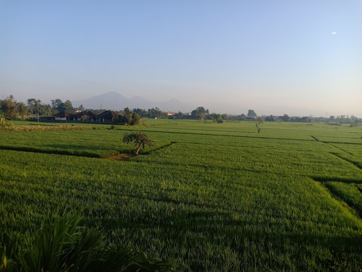 Super King 4in1 with Ricefield View