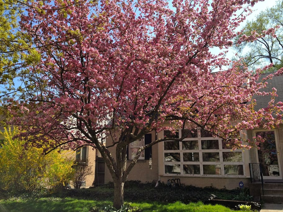 Spring blossoms in front