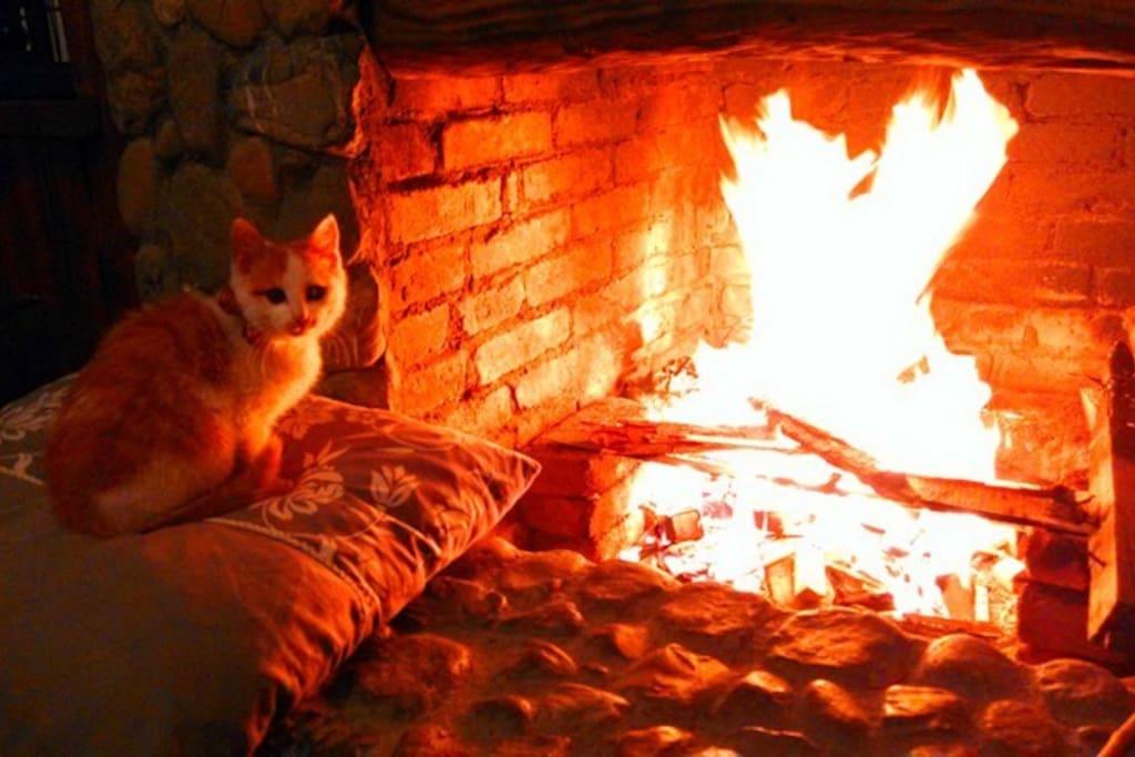 猫咪挨着壁炉取暖