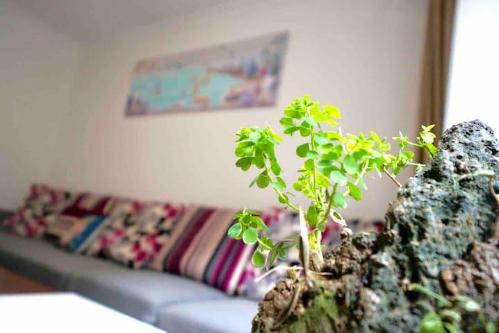 家里窗台还有很多其他各种不同的植物等着你发现哦