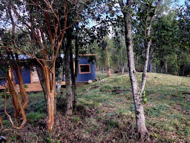 Paz y tranquilidad en el bosque