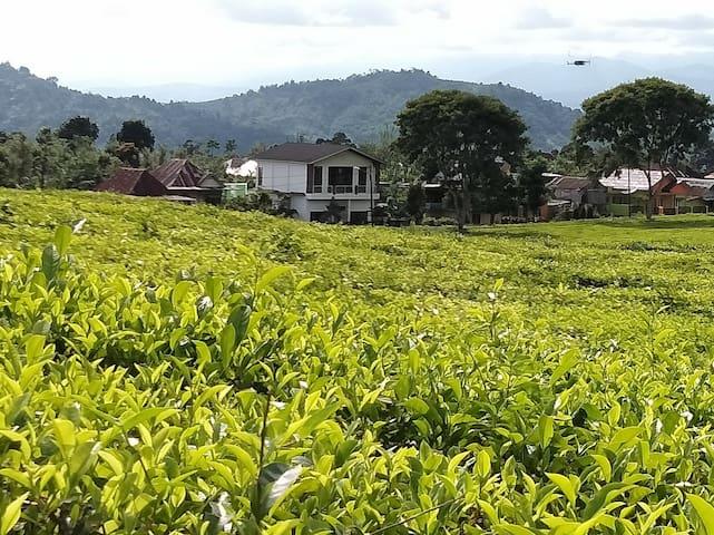 Villa Rosa Pagar Alam