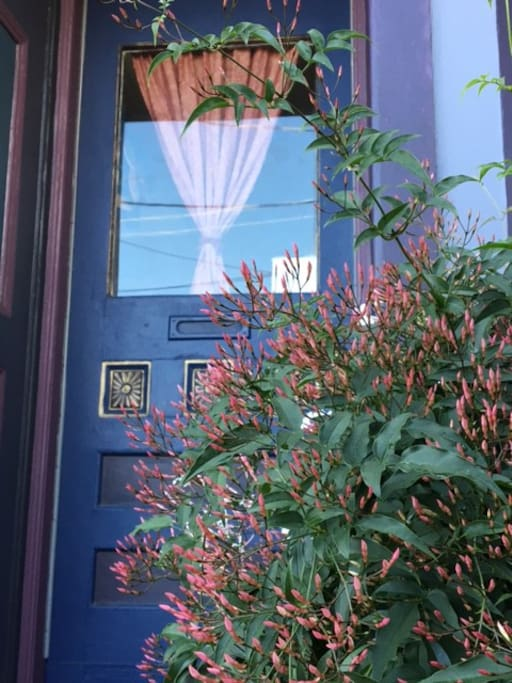 Sweet Jasmine in bloom by the front door.