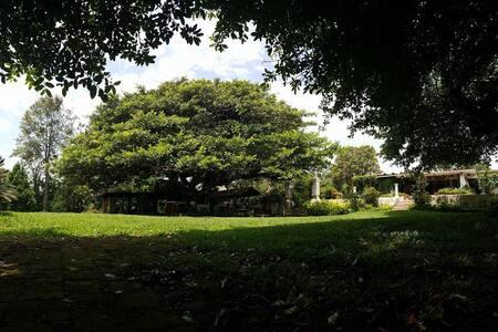 - Finca Santa María - Estate House