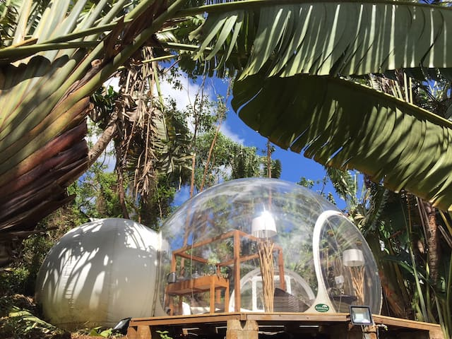 Bubble Lodge : a night in the heart of Nature !