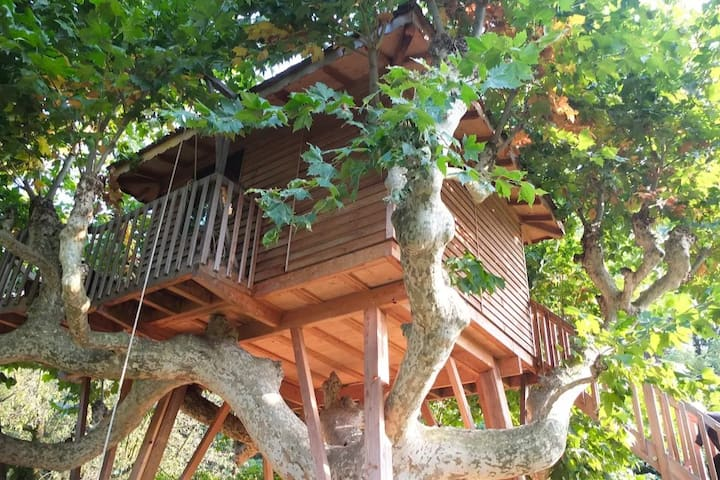 Como Dream Treehouse