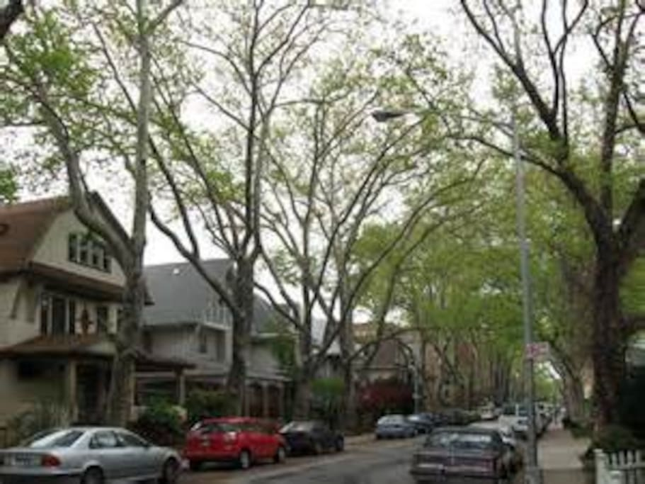 Tree lined streets full of beautiful Victorian homes