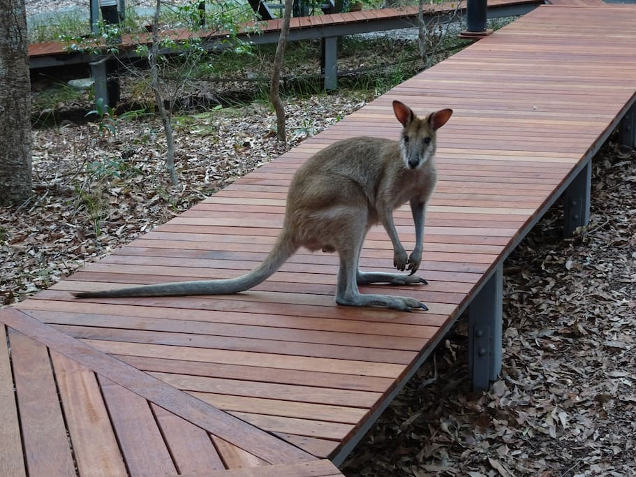 Local approval of our new boardwalk