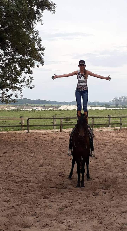 venha conhecer os cavalos do Haras