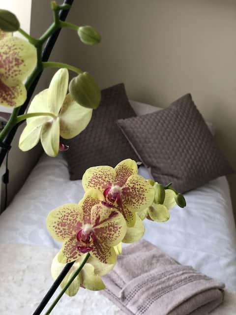 Beautiful single room in hart of Hanwell
