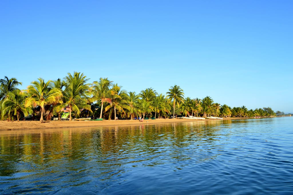 We are right on the beautiful tropical beaches. Where birds and fishes are friends!!