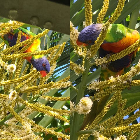 Some friendly Lorikeets enjoying a feed, we get a variety of birds in our garden