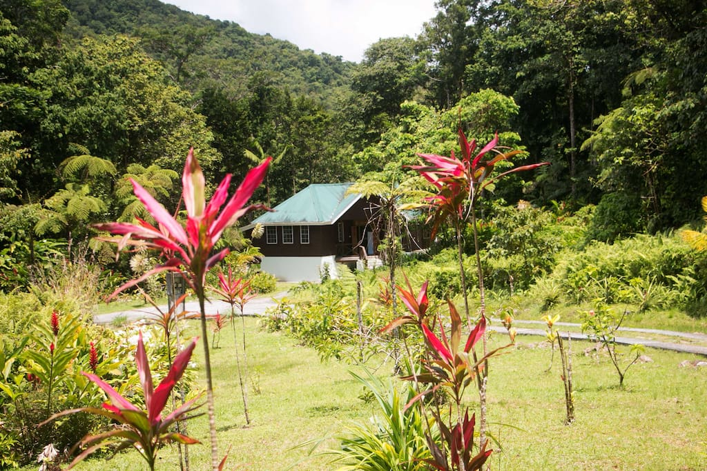 Jacko Cottage is awaiting you for your next nature bathing experience...