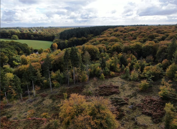 Your own 8 acre woodland tent site close to Henley