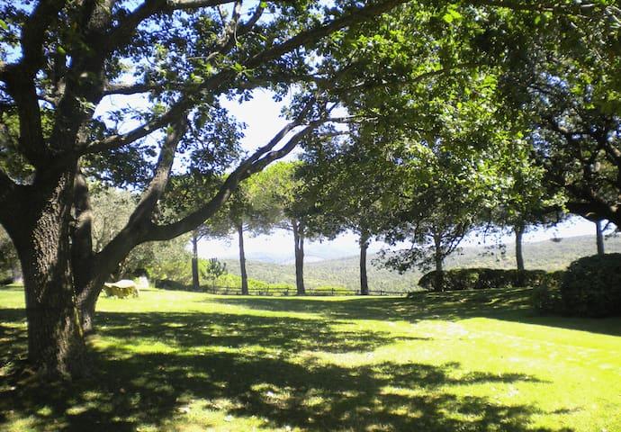 Il giardino, Lato nord