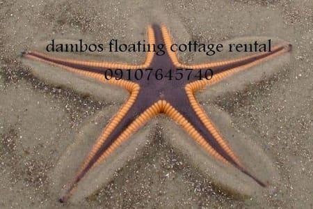 Dambos floating house cottage accomodation