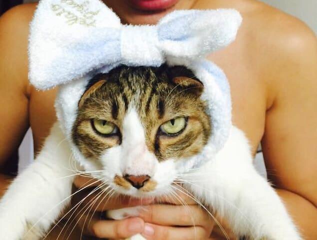 Roomshare And cat together - Edogawa-ku - Byt