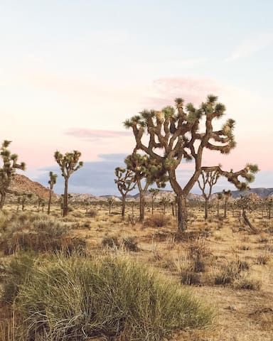 Joshua Tree National Park is a ten minute drive from the house!