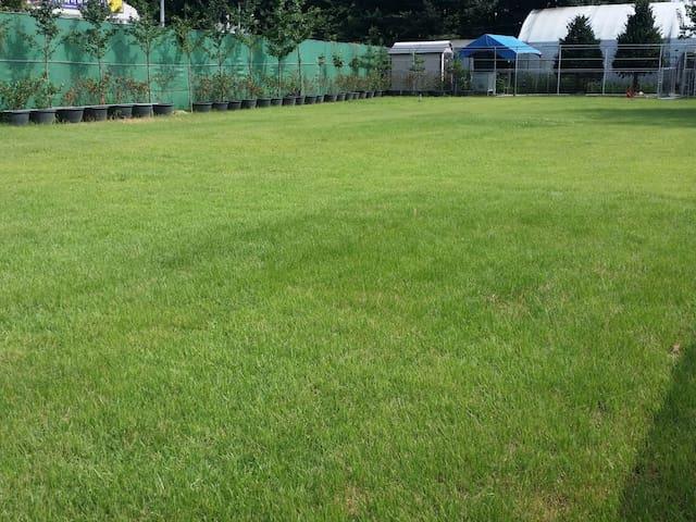 목조 방갈로와 넓은 잔디밭 쉼터
