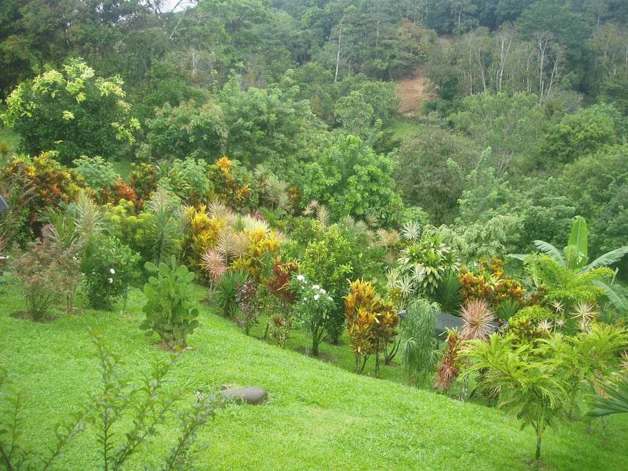 Guest Terrace - Garden View. Terrace is open day and night even while it rains
