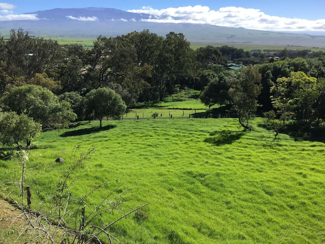 Gorgeous acreage with views of Mauna Kea and Mauna Loa