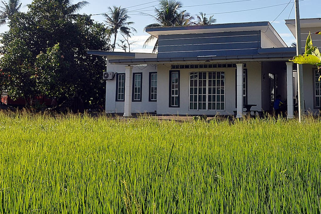 Fronting paddy field