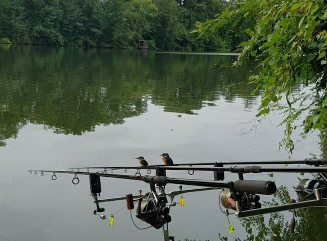 La pêche au bord du Lot, le paradis - Trentels - Andet