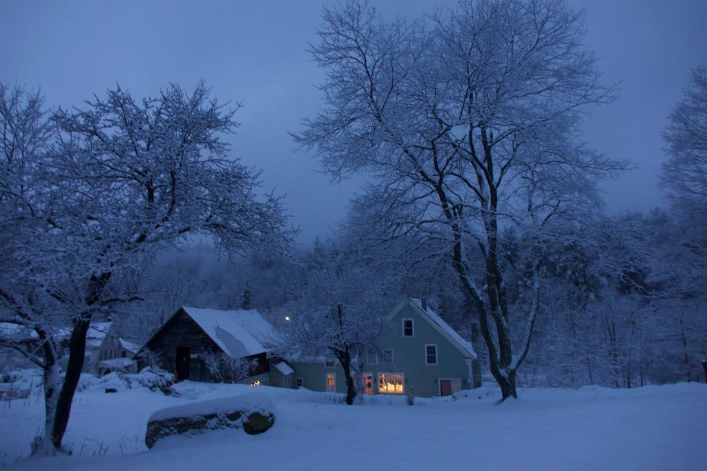 Our snowy and lovely backyard.