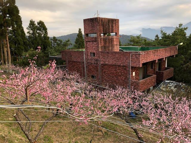 拉拉山風景特定區,園區內有水蜜桃,奇異果,蜜李,甜柿,並且有櫻花園與繡球花園即將開放參觀