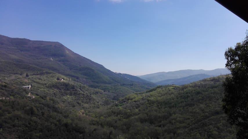 Un angolo di cielo blu in mezzo agli ulivi - Cesio - Byt