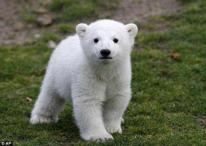 Bear test listing - Jordan Valley - Guest suite