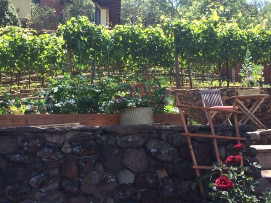 Vines & Herbs