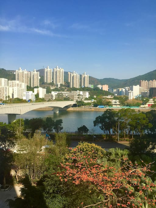 The morning view from our bedroom over the beautiful Shing Mun River.