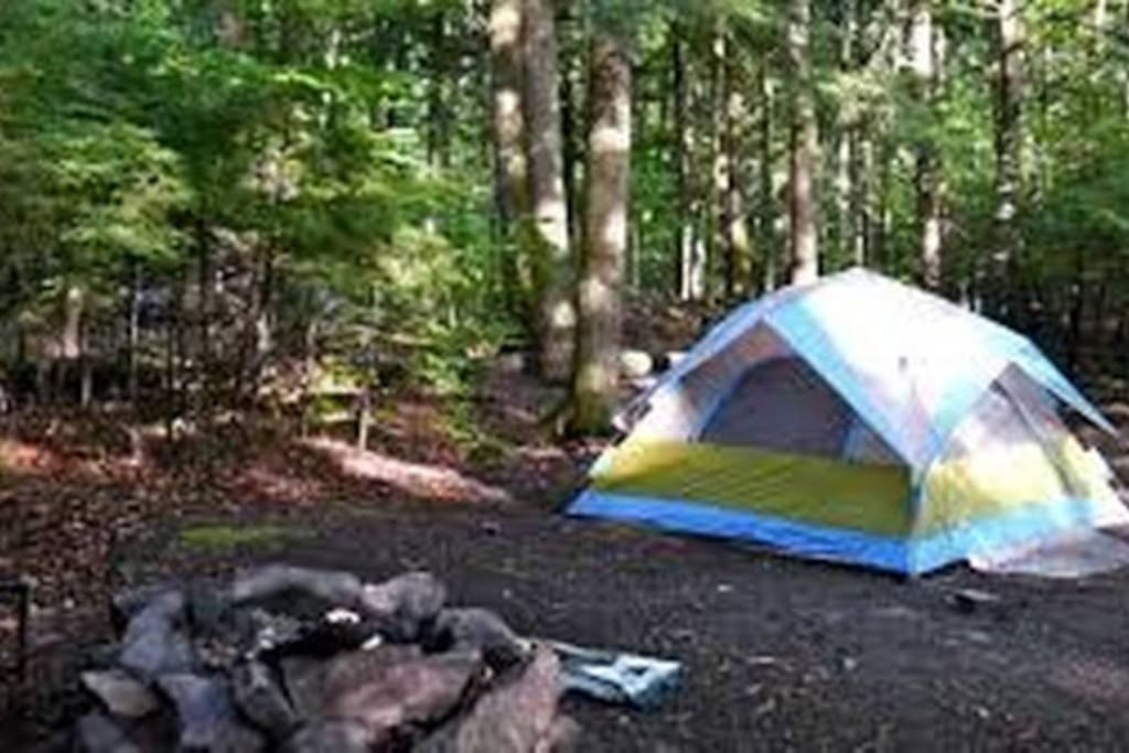 Camp in  the woodlands and enjoy the wildlife and wonders of nature