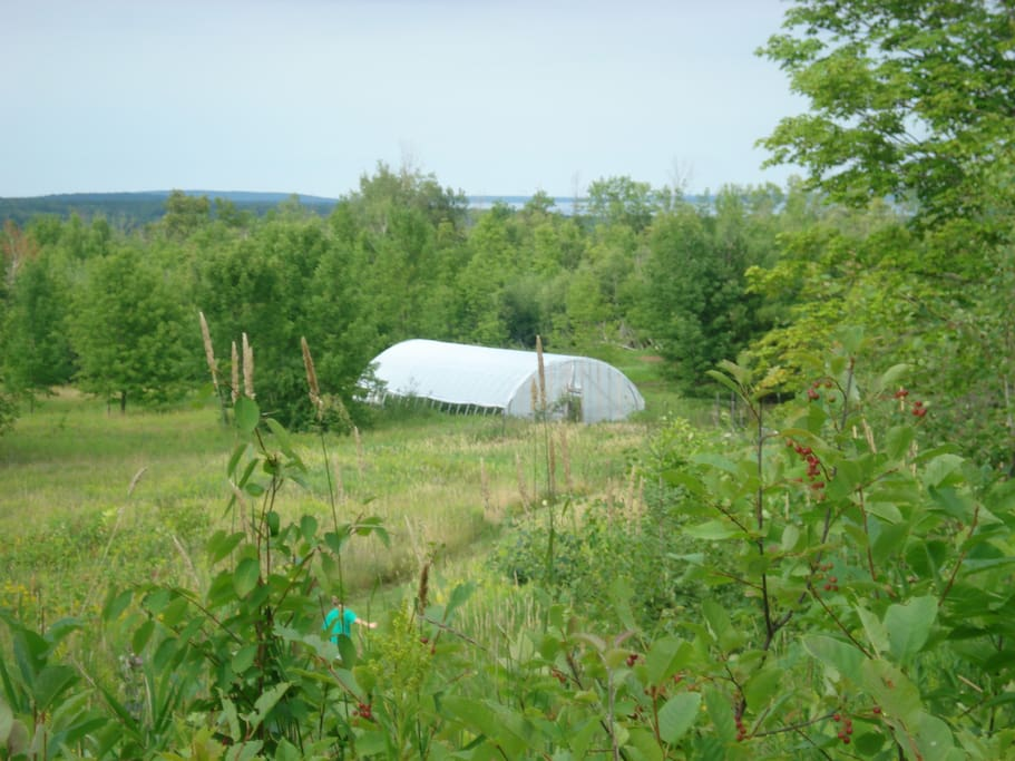 The view from the top of the property with the high tunnel and Lake Superior in the distance