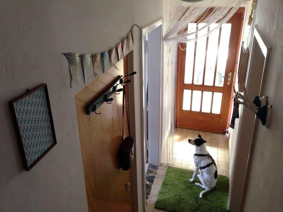 Hunde sind herzlich willkommen