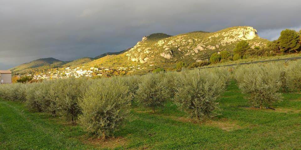 Un petit coin de paradis au pays de Giono
