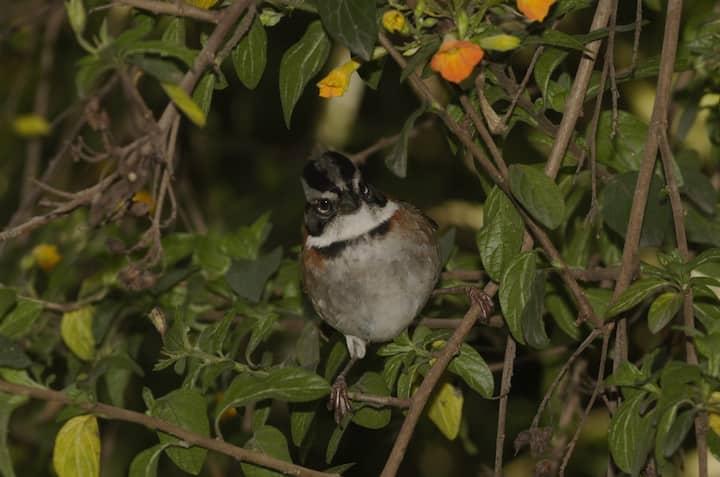 Casa de pájaros en la montaña de Passiflora
