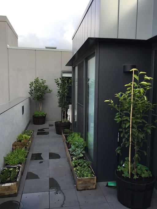 Large, east-facing balcony garden with views of the Dandenong Ranges