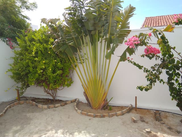 Private rear garden with lovely plants