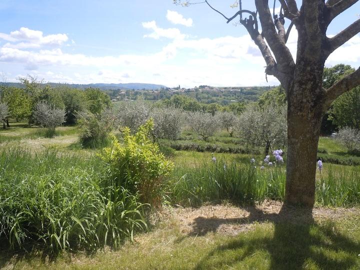 Gîte dans le calme des oliviers et lavandes
