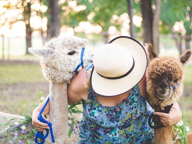 Alpaca My Bags #2 — Artillery Creek Alpaca Farm