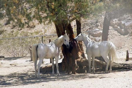 Dude Ranch Desert Experience - #5,6,7 - Palm Springs
