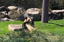 可愛いパンダを見て癒されましょう!/ Let's get appeased by cute pandas.