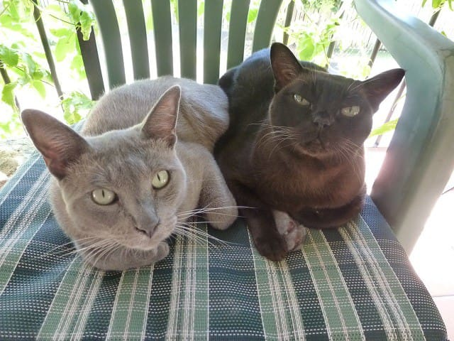 Bruno and Katy, resident relaxation coaches at Chateau Catto
