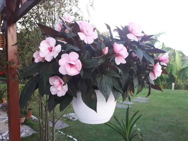 Bellas flores típicas del sector