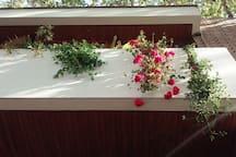Ventanal de la habitacion