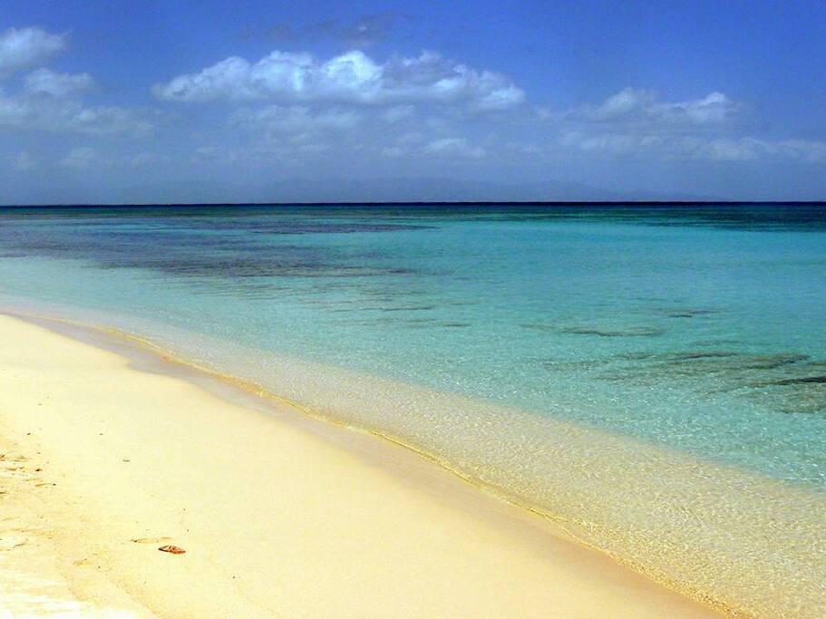 plage de bois Jolan Sainte-Anne