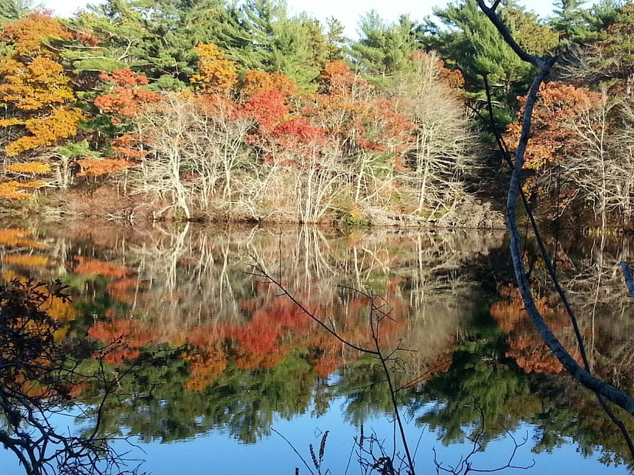 Fall colors: view of the Conservation Area across our pond.
