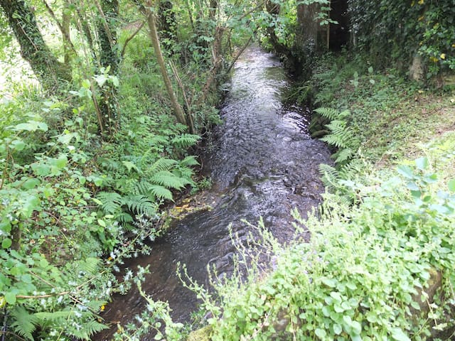 Our river